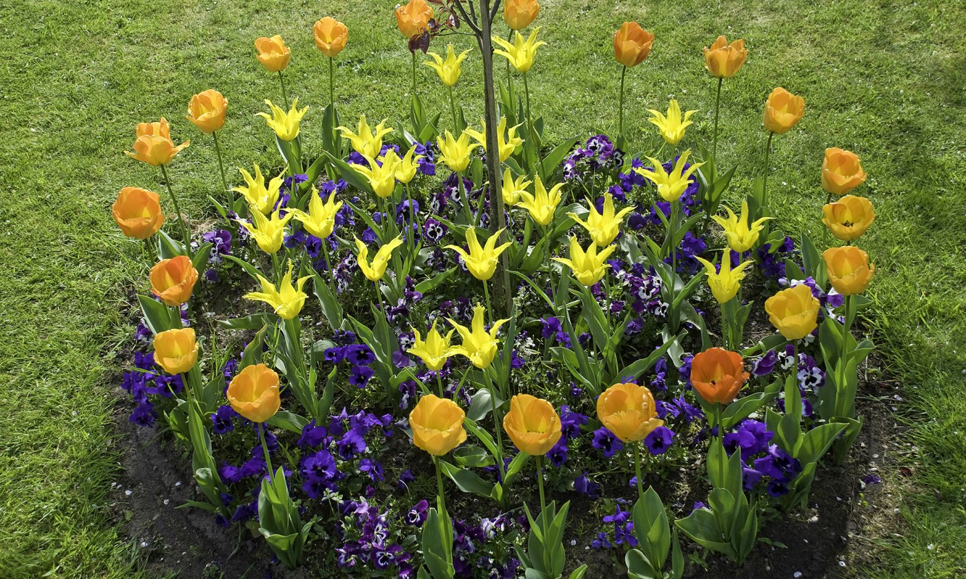 Colourful Round Flower Bed
