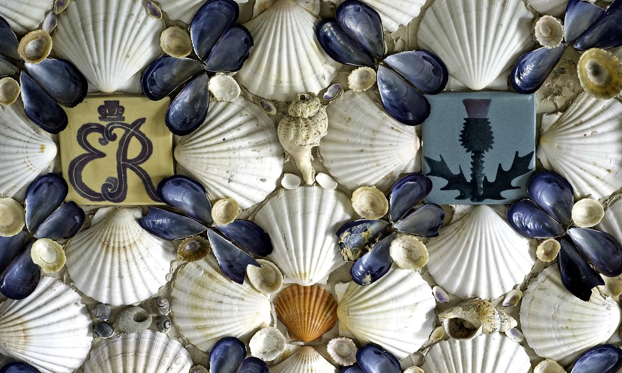 Sea Shell Patterns on Wall