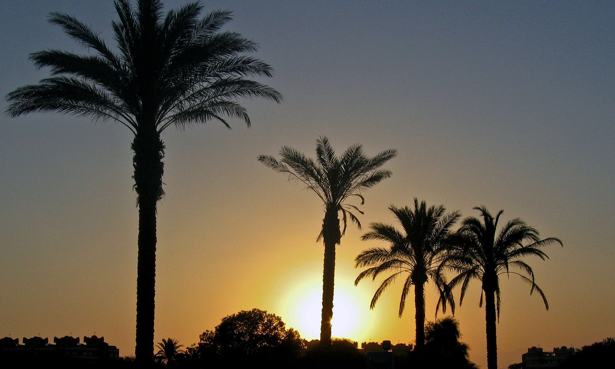 Sunset behind Palm trees in Spain