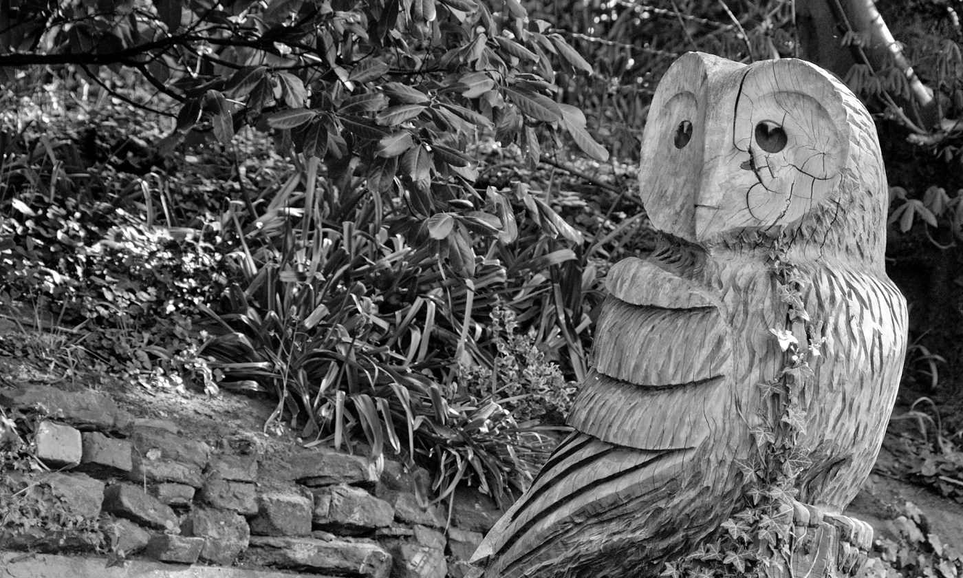 Wooden Owl Sculpture in Rostherne