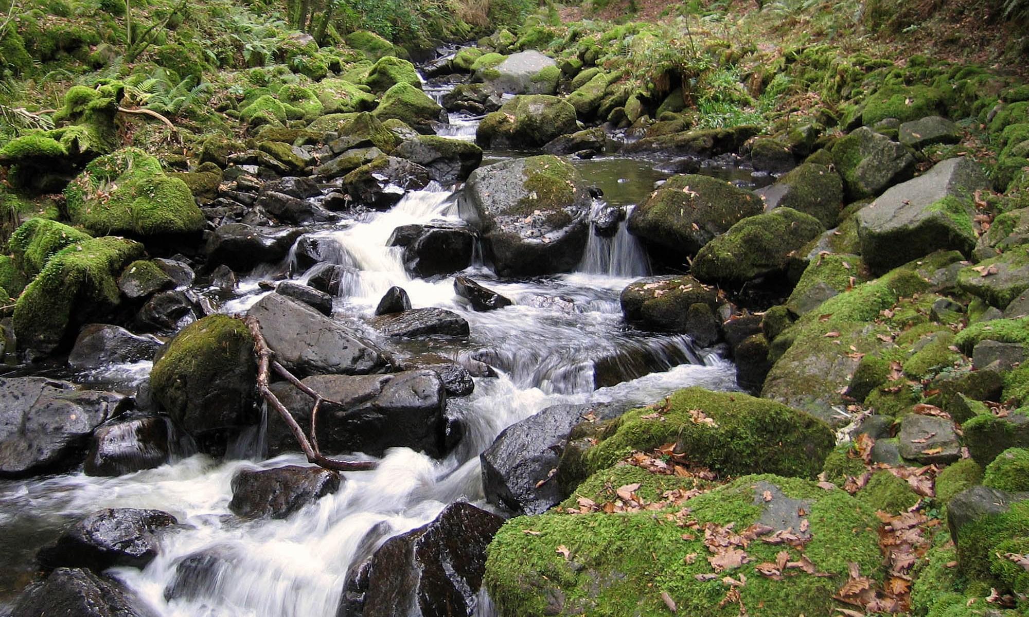 Esk River near Stanley Ghyll