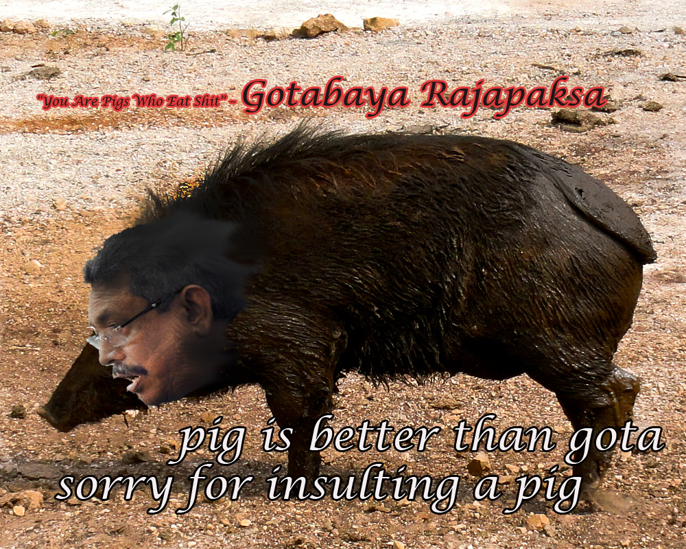 Gotabaya Rajapaksa is worst than a pig