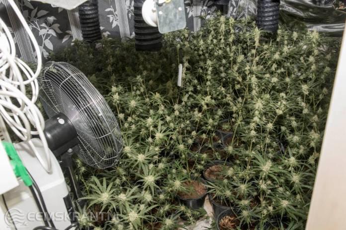 Hennepkwekerij met 591 planten in woning Ubbenasingel Spijk