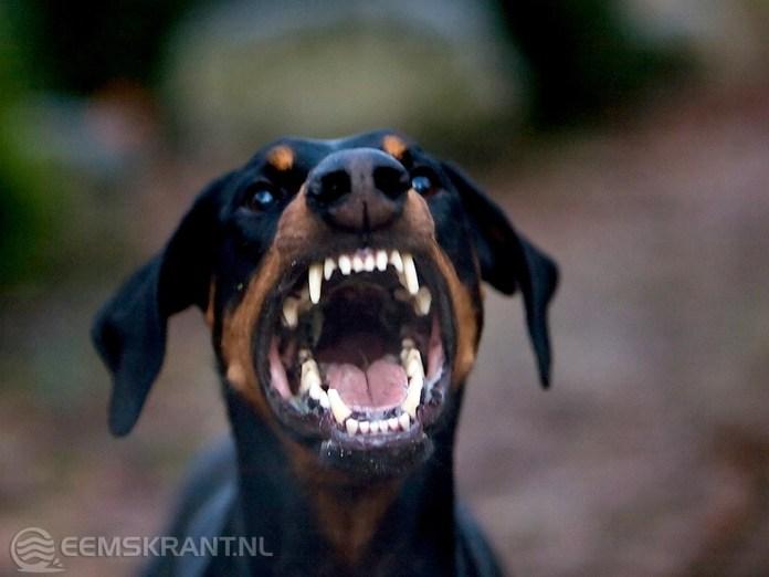 Maatregelen tegen bijtincidenten agressieve honden