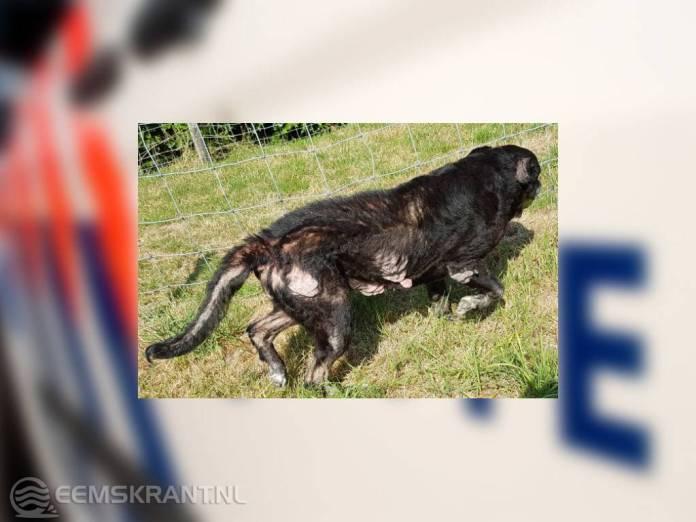 Politie neemt zwaar verwaarloosde hond in beslag