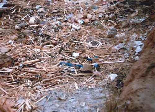 School rubbish pit (photo taken by children in Zambia)