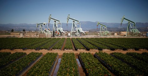 Oil pump jacks are seen next to a strawberry field in Oxnard, Calif. Photo credit: Lucy Nicholson/REUTERS/Newscom