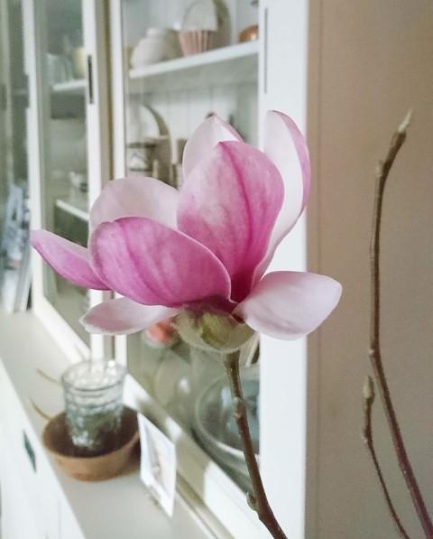 magnoliatakken in vaas