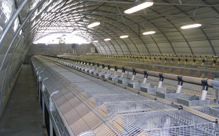 Solidarity to Spanish workers in the poultry and rabbit meat sector