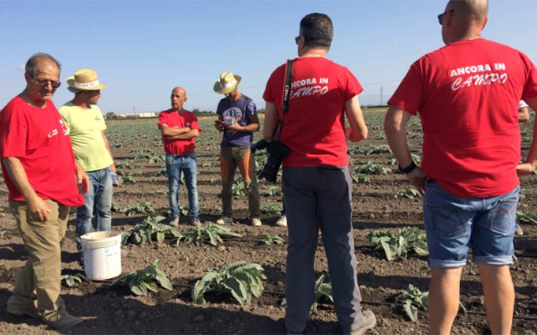 EFFAT and FLAI fight underpayment and gang masters in agriculture