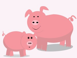Pigs as an image of commitment