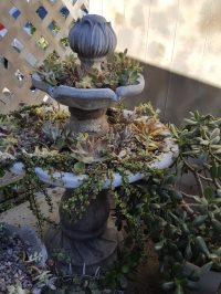 Yvon's succulent garden