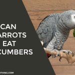 Can Parrots Eat Cucumbers
