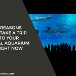 4 Reasons to Take a Trip to Your Local Aquarium Right Now