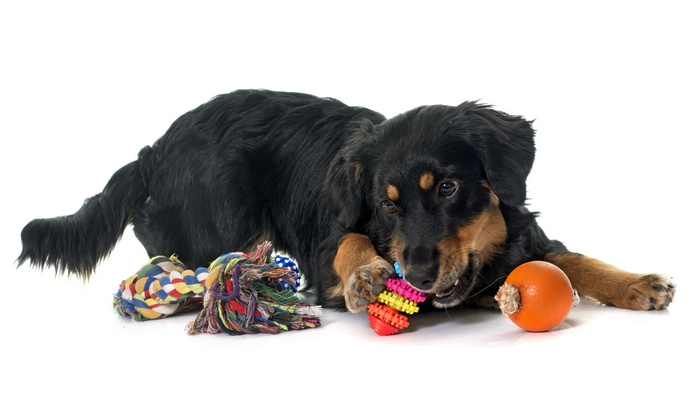 The 4 Best Dog Toys to Buy in 2018