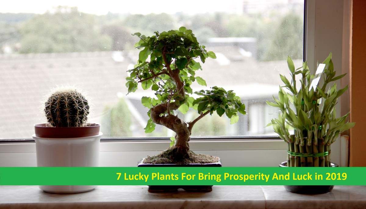 7 Lucky Plants For Bring Prosperity And Luck in 2019