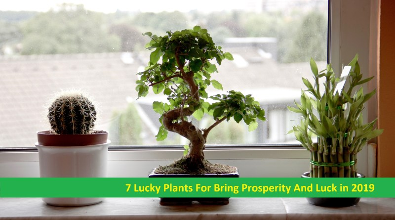Lucky Plants For Bring Prosperity And Luck in 2019
