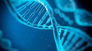 Transcription inverse de l'ARN du SARS-CoV-2 et intégration dans le génome humain