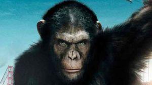 Involution : les premiers embryons homme-singe créés en laboratoire