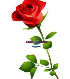قصيدة... أنا والزهرة