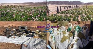 القوات المسلحة بالتعاون مع وزارة الداخلية تنظم حملة مكثفة للقضاء على الزراعات المخدرة بشبه جزيرة سيناء   القوات المسلحة