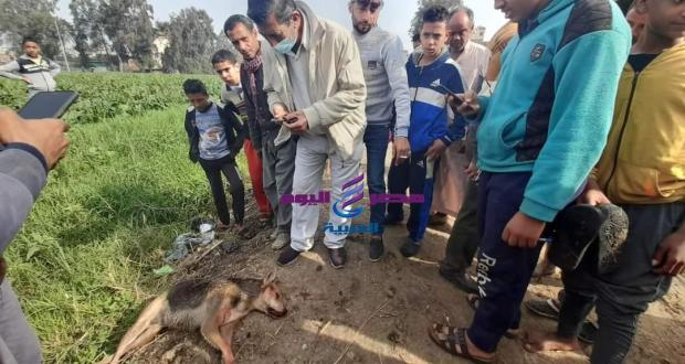 الهدوء يعود لقرية كفرالعرب بعد التخلص من الكلب المسعور