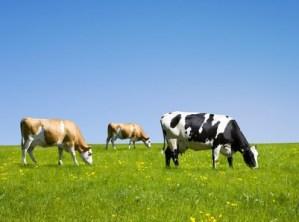 Protéines issues de l'agriculture biologique