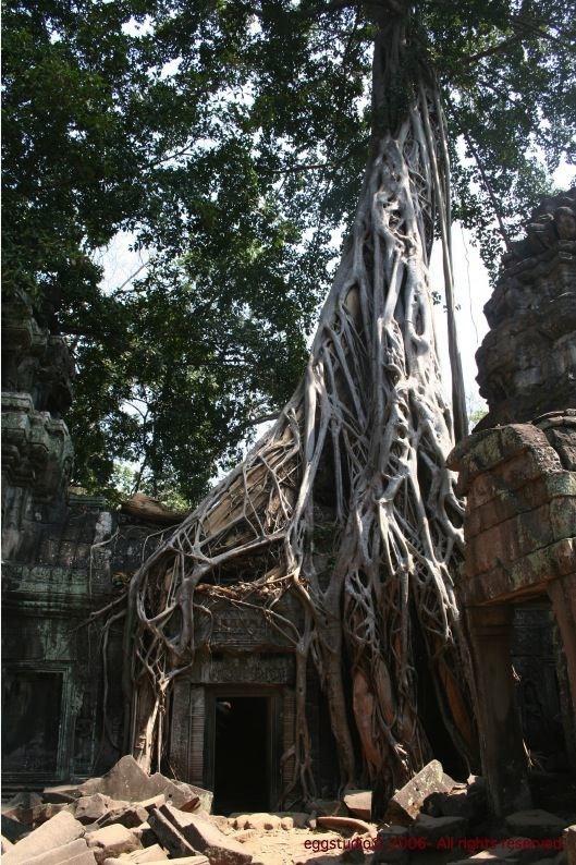 Temple of Ta Prohm -- 是否似曾相識?這座被大樹纏繞的建築在很多電影出現過。