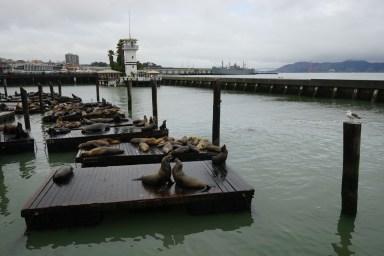 漁人碼頭看海獅。