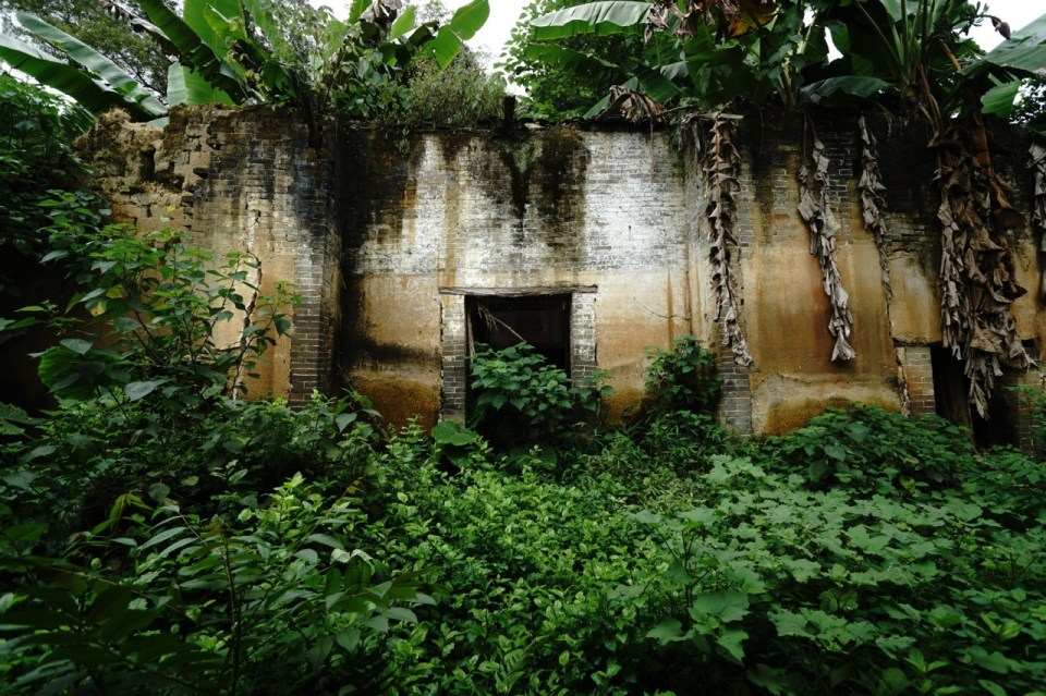 整棟建築物已荒廢,被植物覆蓋。