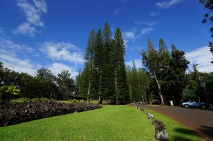 尋找 1944 年墜毀 B-24 轟炸機 -- Aiea Loop TrailKeaiwa Heiau State Park