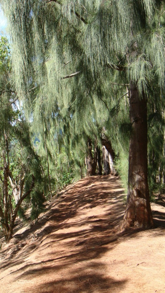 松樹林路。