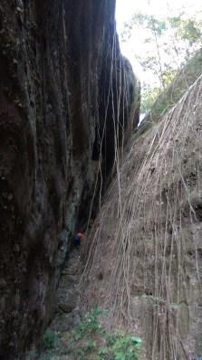 岩壁佈滿樹藤。