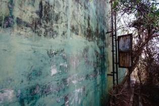 鐵梯原本被樹藤完全覆蓋。