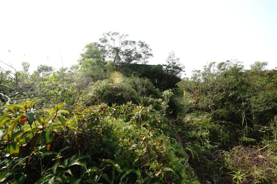隱蔽在樹木野草之內的舊英軍儲水缸。