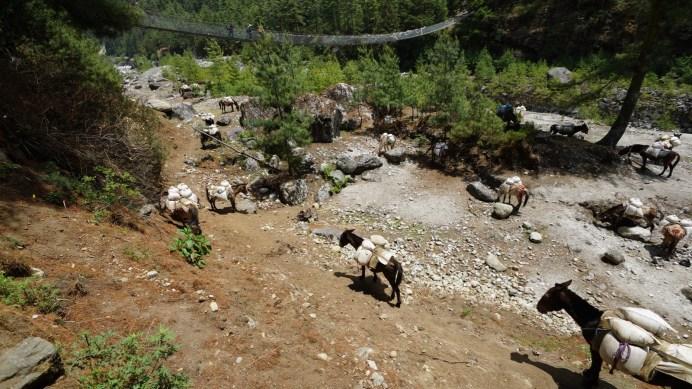 Dudh Koshi 河岸遇到運貨上山的驢隊。
