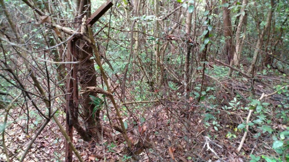 直井 S4 及 S5 位於人跡罕至的叢林內。