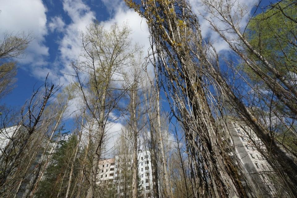 普里皮亞季裏能夠看到人類建築與大自然融為一體的景象。