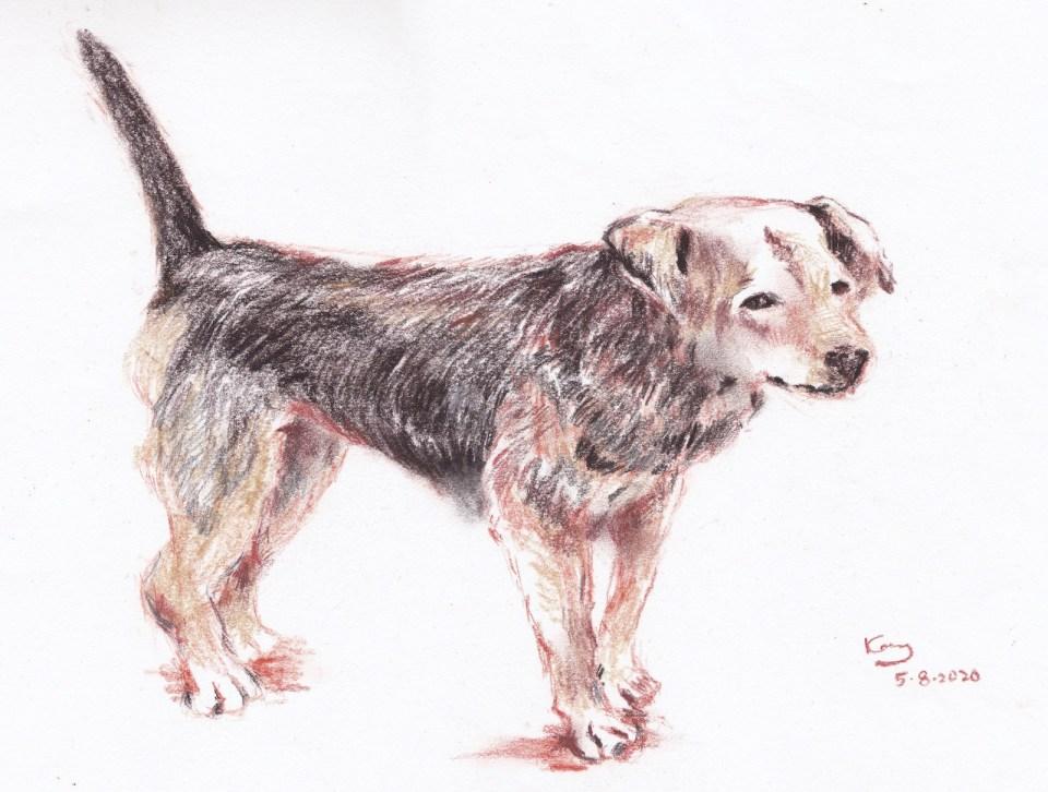 《鄉村的狗》(課堂示範)碳筆 35cm x 25cm 5-8-2020