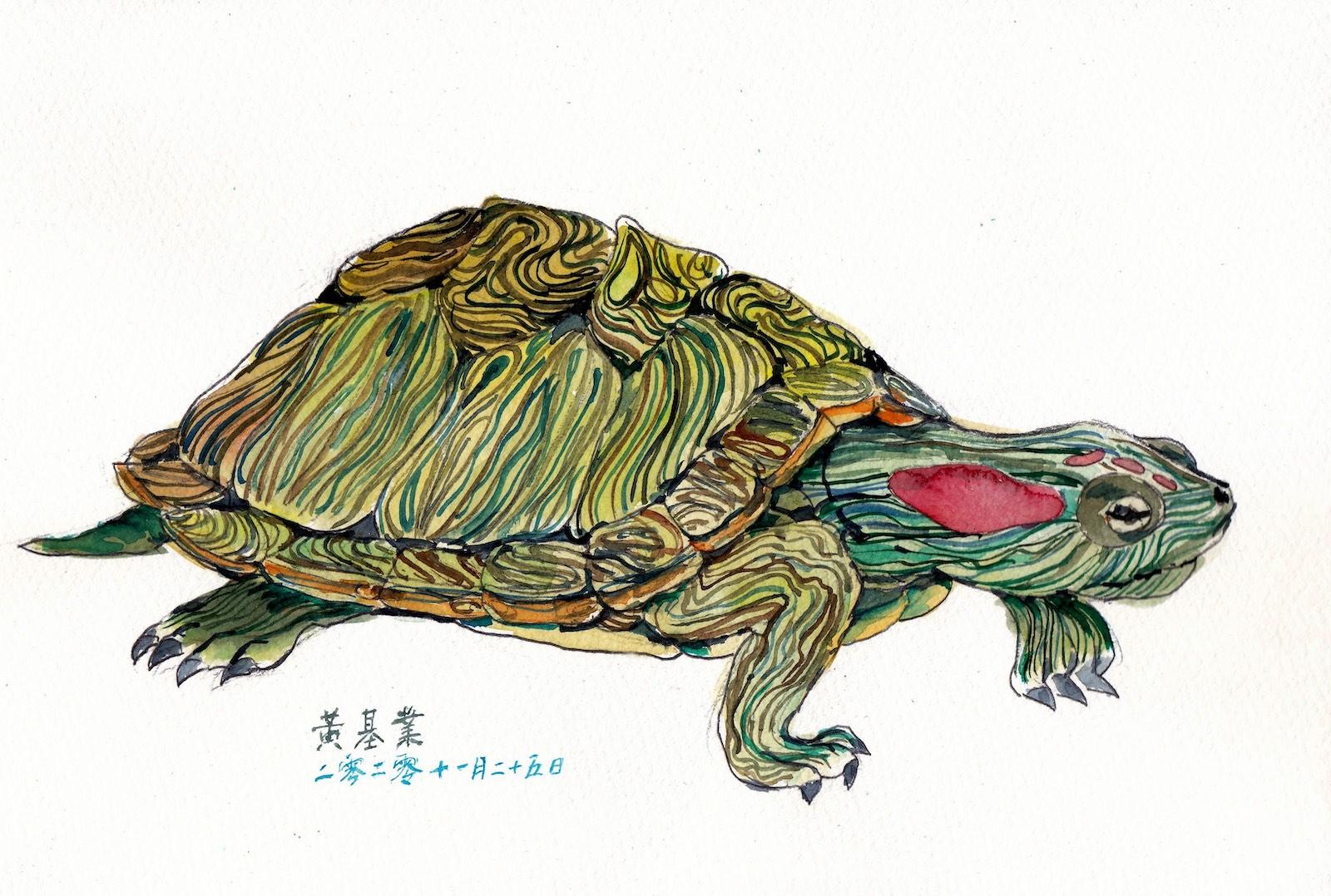 《龜》(課堂示範)水彩 27cm x 18cm 25-11-2020