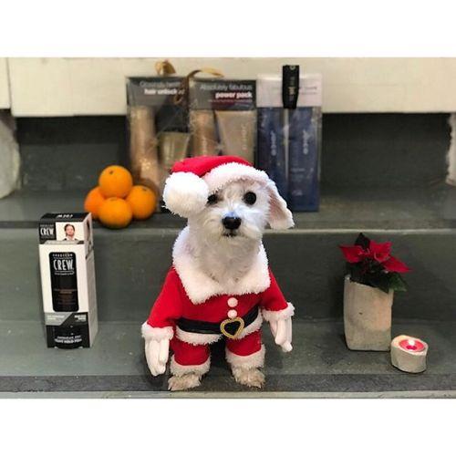 Vi vill önska alla våra kunder en riktigt underbar jul! Efter idag tar vi julledigt och öppnar igen måndag 8/12! Dagen till ära är Penny iförd sin jultomte dräkt.
