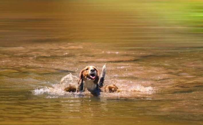Um-dia-de-cão-Unahy-Foto-Vanessa-Sallesaro-2 Title category