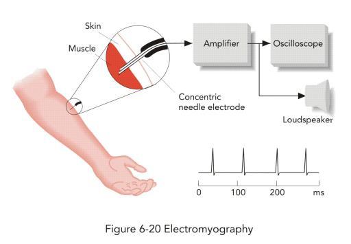 كمال أجسام أقوى 46 تمرين على الاطلاق لكل عضلات الجسم