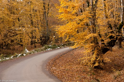 Fall in Forest of Alangdarreh