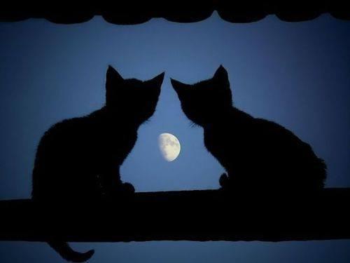 月 が 綺麗 です ね 英語