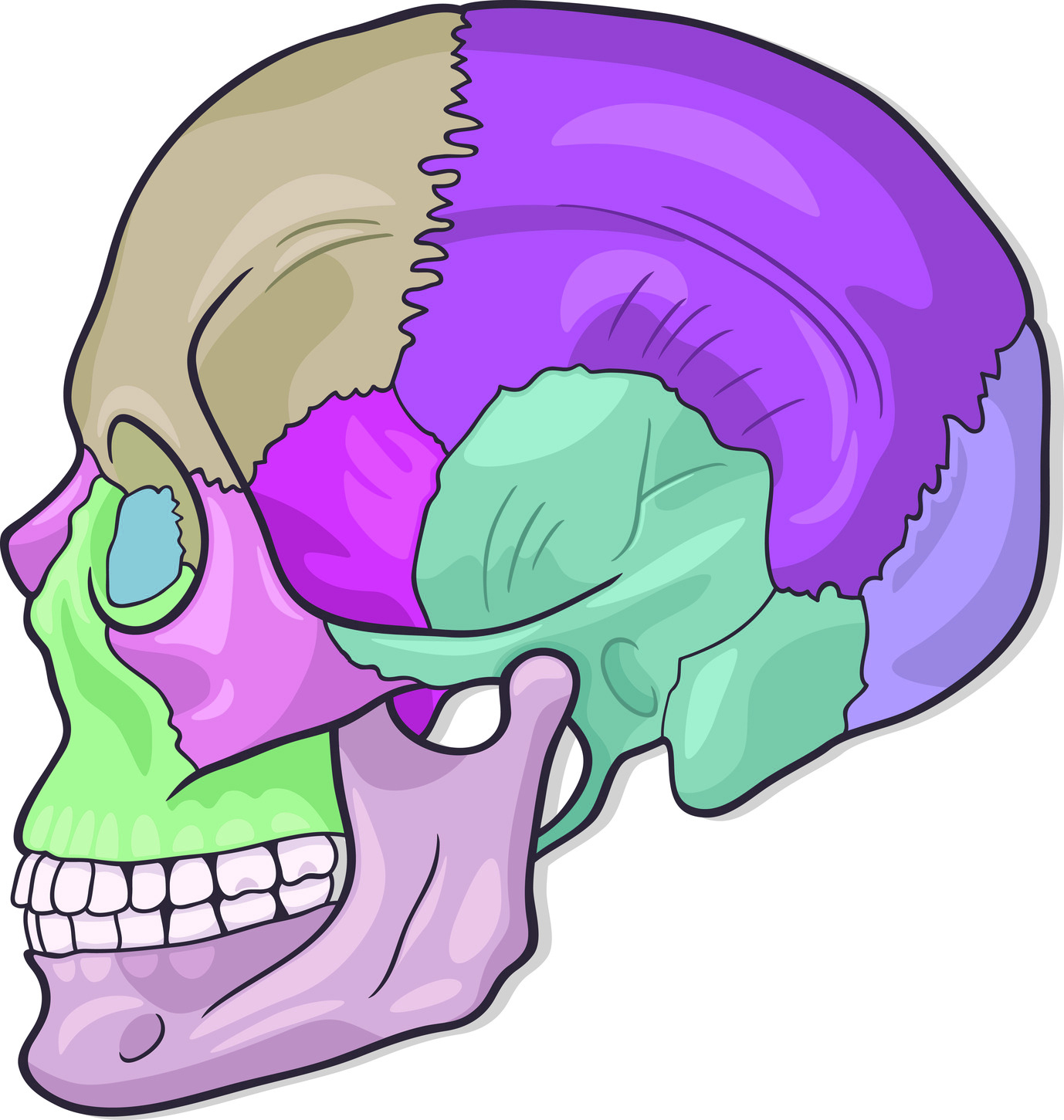 "Craniosacral Heals By Assessing The ""Craniosacral Rhythm"