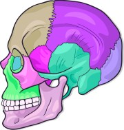 "Craniosacral heals by assessing the ""Craniosacral Rhythm"