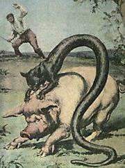 The Tatzelwurm by Eileen Mueller