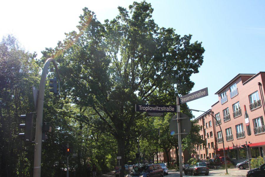 43 Bäume in Eimsbüttel müssen gefällt werden
