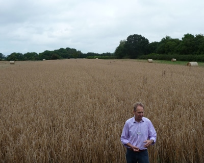 Farm manager and field of spelt